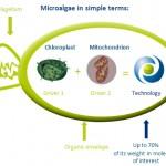 fermentalg-microalgae