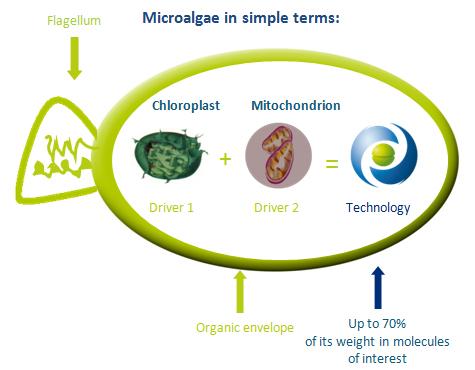 Micro-algae described